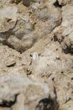 Corales y cáscaras fósiles Foto de archivo