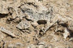 Corales y cáscaras fósiles Fotos de archivo