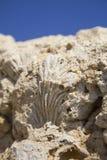 Corales y cáscaras fósiles Foto de archivo libre de regalías