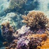 Corales y Marine Life Imágenes de archivo libres de regalías