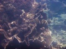 Corales y Marine Life Foto de archivo libre de regalías