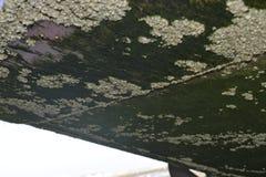 Corales y musgo Foto de archivo