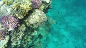 Corales y Piscis en agua clara Mar Rojo almacen de video