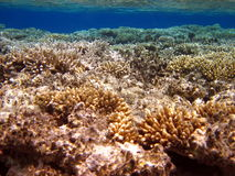 Corall reef Royalty Free Stock Images