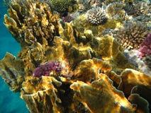 Coralli Fotografia Stock