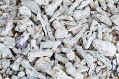 Coralli asciutti bianchi Immagini Stock Libere da Diritti