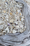 Coralli asciutti bianchi Fotografia Stock
