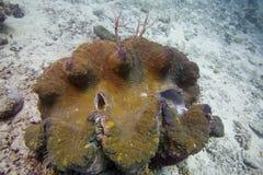 Coralli australiani, piante, creature subacquee, pesce variopinto fotografie stock