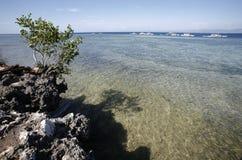 Coralli crescenti. Fotografia Stock Libera da Diritti