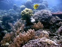 Coralli dappertutto! Fotografia Stock Libera da Diritti