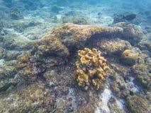 Coralli delle Maldive della scogliera fotografia stock libera da diritti