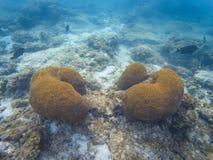 Coralli delle Maldive della scogliera immagine stock libera da diritti