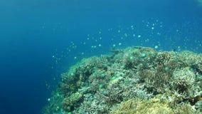 Coralli e pesce bassi e bei in Raja Ampat stock footage