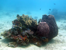Coralli e pesce sotto acqua nelle Filippine Fotografia Stock Libera da Diritti