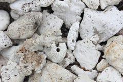 Coralli e pietre Fotografia Stock