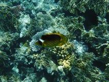 Coralli e un pesce Fotografia Stock Libera da Diritti