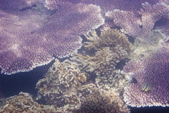 Coralli & Marine Life Fotografie Stock