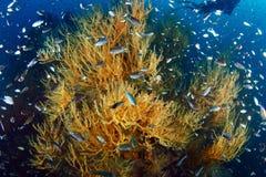 Coralli molli Immagini Stock Libere da Diritti