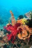 Coralli molli immagine stock
