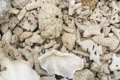 Coralli morti Immagine Stock