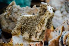 Coralli nella forma del cucciolo immagine stock