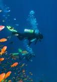 Coralli, pesci ed operatori subacquei Fotografia Stock