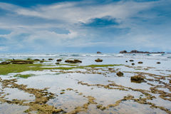 Coralli sopra la superficie dell'oceano durante la bassa marea fotografia stock