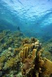 Coralli subacquei Fotografia Stock Libera da Diritti