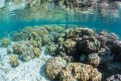 Coralli variopinti di Boulder Fotografia Stock