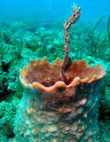 Corallo Immagini Stock Libere da Diritti