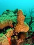Corallo Fotografia Stock Libera da Diritti