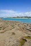 Corallo alla spiaggia di Oporto de Galinhas immagini stock libere da diritti