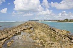 Corallo alla spiaggia di Oporto de Galinhas Fotografie Stock Libere da Diritti