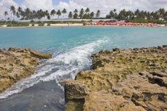Corallo alla spiaggia di Oporto de Galinhas Immagini Stock