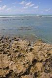 Corallo alla spiaggia di Oporto de Galinhas immagine stock