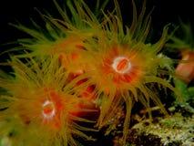 Corallo arancio di Sun al Mar Rosso di notte Fotografia Stock