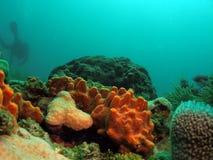 Corallo arancione con l'operatore subacqueo fotografia stock libera da diritti