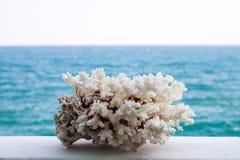 Corallo bianco, bello primo piano sui precedenti del mare fotografia stock libera da diritti