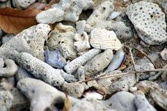 Corallo candeggiato sulla sabbia immagine stock