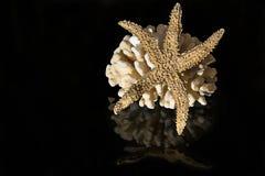 Corallo del mare e stella di mare Fotografie Stock Libere da Diritti
