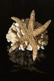 Corallo del mare e stella di mare Fotografia Stock Libera da Diritti