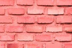 Corallo del muro di mattoni fotografia stock libera da diritti