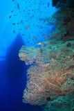 Corallo del ventilatore e barca di tuffo Fotografie Stock Libere da Diritti