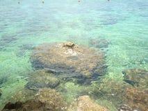 Corallo della roccia Fotografia Stock Libera da Diritti