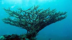 Corallo duro alla barriera corallina Fotografie Stock