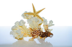 Corallo e coperture marini Fotografie Stock Libere da Diritti