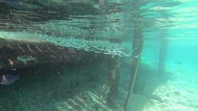 Corallo e pesce sul Bonaire stock footage