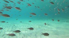 Corallo e pesce sul Bonaire archivi video