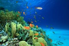 Corallo e pesci Fotografia Stock Libera da Diritti