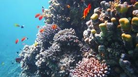 Corallo e pesci video d archivio